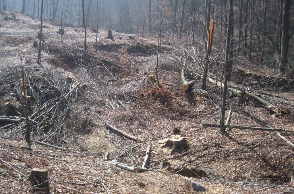 Procesuirati će se svaki nelegalni oblik sječe šume